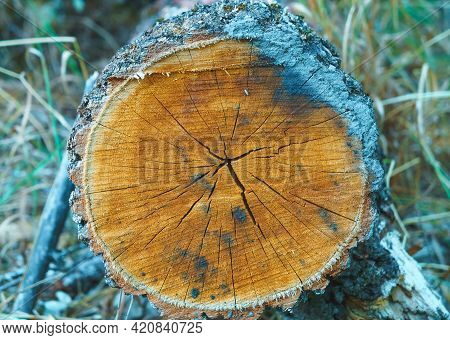 Log Trunk. Deforestation For Safety. Sawn Trees From Forest. Logging Timber Wood Industry.