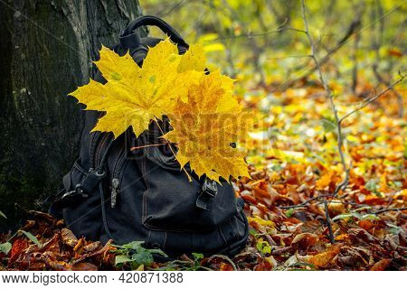 Backpack In The Woods Under A Tree In Autumn. Autumn Forest. Rest In The Woods. Yellow Maple Leaves