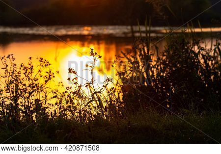 Thickets Of Vegetation On The Shore River At Sunset