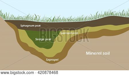 Structure Of Pond And Marsh With Bottom Sediments. Vector Illustration Eps10
