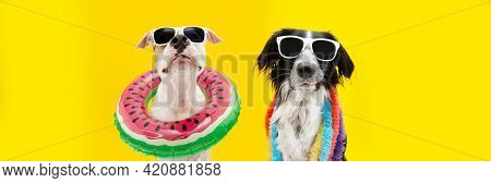 Banner Funny Dogs Summer. American Staffordshire  Inside An Ring Inflatable And A Border Collie Wear