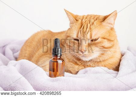 Calm Ginger Cat And A Brown Bottle Of Medication. A Glass Vial With Herbal Treatment Or Cbd Oil (med