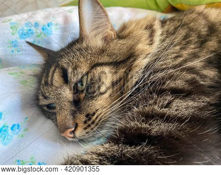The Head And Muzzle Of A Striped Fluffy Beautiful Sleeping Cat With Eyes With A Mustache And Ears, L