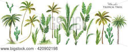 Watercolor Tropical Tree Set. Green Palm Leaves, Cactus Plants, Succulents Bush