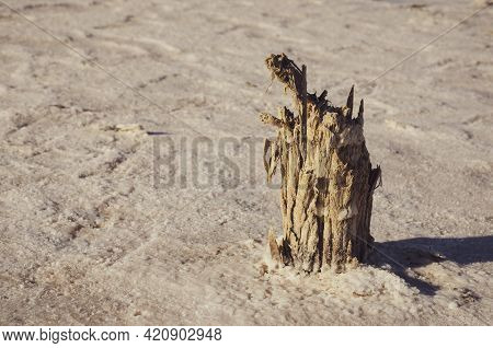 White Desert Or Salt Lake. Remains Of A Wooden Building In A Salt Lake. Rotten Wooden Pillar. Extrac