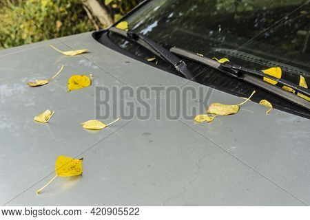 Fallen Yellow Leaves On The Hood Of The Car. Fallen Leaves On The Windshield Of A Gray Car. Beginnin