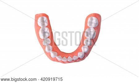 Plastic Human Teeth Model Placed On A White Background,isolated With Clipping Path.dental Examinatio
