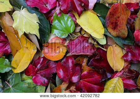 Colorful gift of autumn