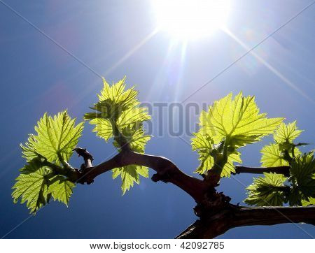 Beams of sun light