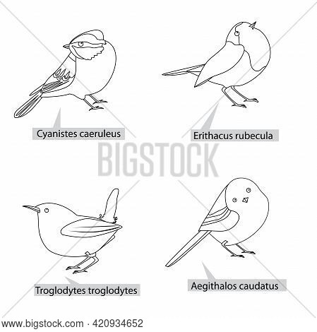 Small Pretty Birds, Real Latin Names. Black Lines, Contour Style. Illustration Can Be Used For Color