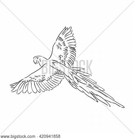Vector Cockatoo Silhouette Isolated On White Background. Tropical Bird Illustration. Hand Drawn Parr