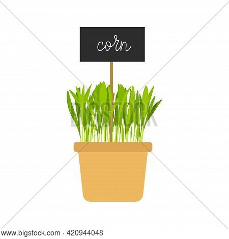 Hand Drawn Potted Corn Microgreens. Organic Healthy Food. Corn Sprouts With Green Leaves Isolated On