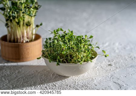 Alfalfa Sprouts In A White Bowl. Grow Microgreen For Food. Healthy Vitamin Food. Germinate Alfalfa S
