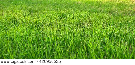 Summer Background With Green Juicy Grass. Selective Focus, Blurred Foreground. Panorama.