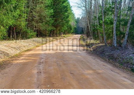 Green Forest Pathway View. Forest Pathway Landscape. Pathway In Forest.empty Road Through Forest Wit