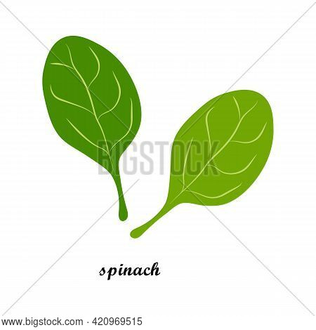 Vector Illustration Of Spinach Leaves With Title Text Isolated On White Background. Leafy Vegetables