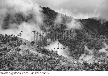 Rainy alpine landscape of Cocora valley, Salento, Colombia, South America