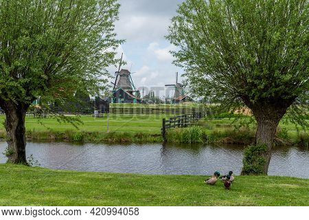 Tree-lined Canal In Holland With Traditional Windmills In The Background
