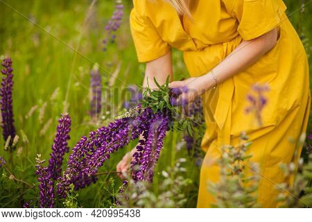 A Girl In A Yellow Dress Collects A Bouquet Of Lupins In The Summer In The Field. Woman With A Bouqu