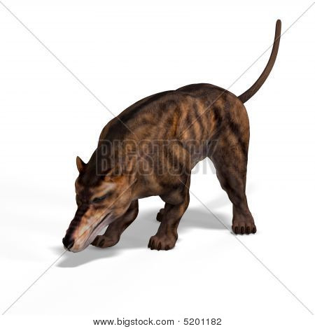 Andrewsarchus 04 A_0001