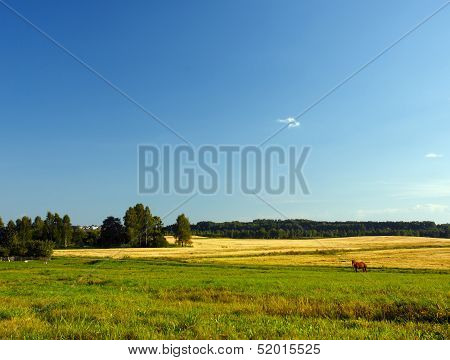 Landscape with forest and horse in a meadow