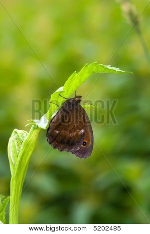 dryad cutter butterfly sitting on the blade poster