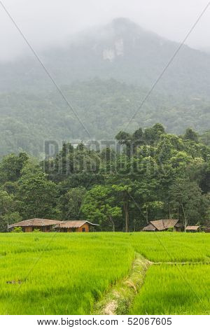 Rain Green Field And Mountain In Doi Inthanon, Maeglangluang Karen Villages