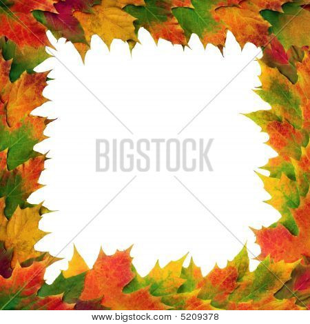 Maple leaves in autumn forming a border over white background. poster