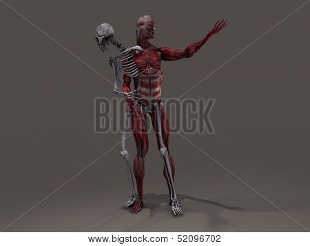 Inner skeleton and musculature man divide poster