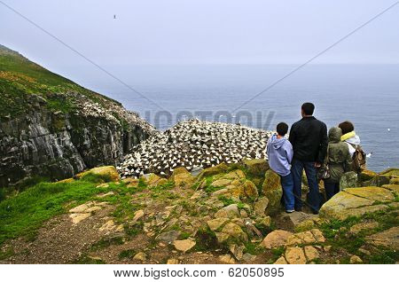 Family watching northern gannets at Cape St. Mary's Ecological Bird Sanctuary in Newfoundland, Canada