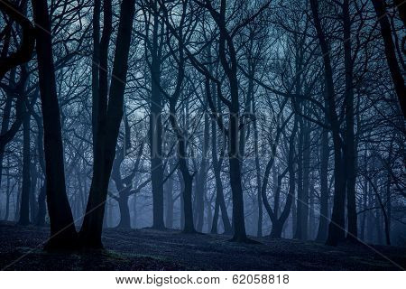 Mystical forest in autumn