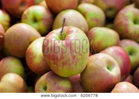 Group Of Honeycrisp  Apples