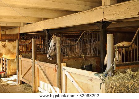 Horse stables with wooden doors and horses