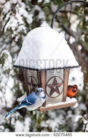 Blue jay and cardinal birds on bird feeder in winter