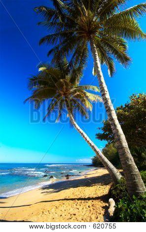 Palm Trees On Moloaa Bay
