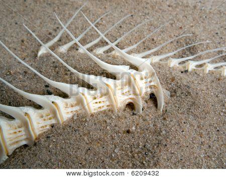 Sea fish white bone closeup on sand background poster