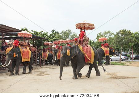 Ayuthaya Thailand-september 6 : Elephant For Tourist Riding Ready For Tourist Service In Ayuthaya Wo