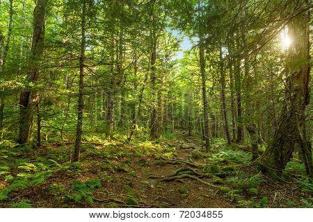 Moose Horn Trail Path