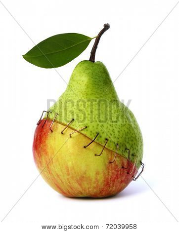 piece of an apple and a pear stapled together symbolizing the negative aspects of genetic engineering.