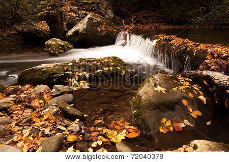 Autumn River