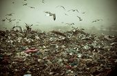 Apocalyptic scene of birds flying over the dump , retro style artistic toned photo poster