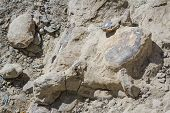 fossils found at an outdoor archeological site with labels on the pares embedded in the rock poster
