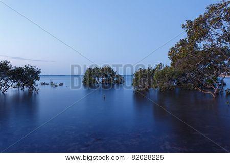 Australian Mangrove Trees At Sunset