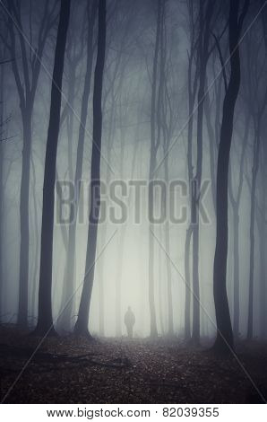 Man walking on path in mysterious forest with fog and path