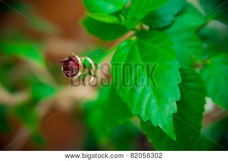 Two Wedding Rings Hanging On A Flower