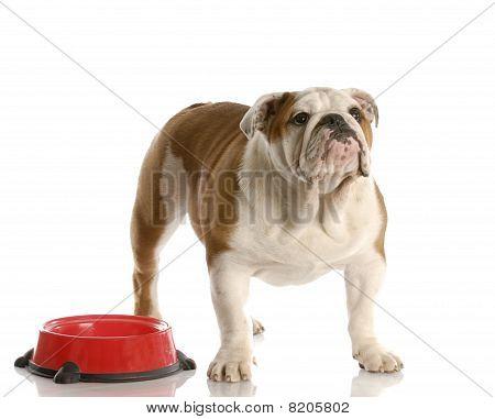 Dog Waiting To Be Fed