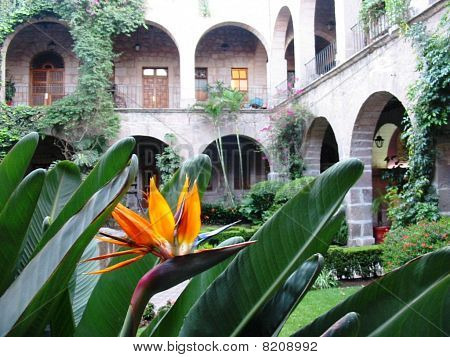 Bird of paradise in colonial courtyard