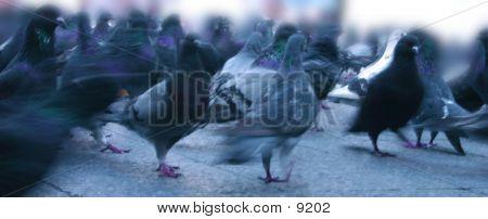 Crossing Doves