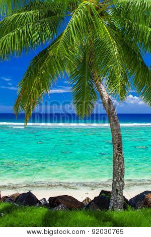 Single palm tree on amazing tropical beach on Rarotonga, Cook Islands