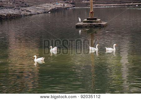 Duck Ten